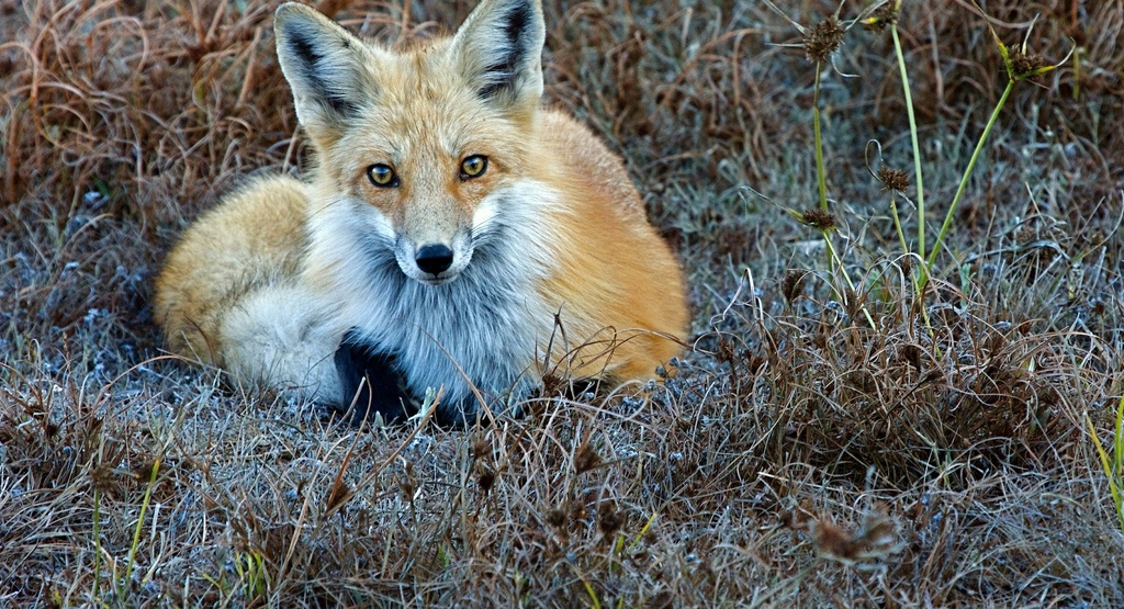 are-foxes-dogs-or-cats-and-other-probing-questions